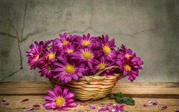 цветы, лепестки, стена, доски, трещины, хризантемы, корзинка