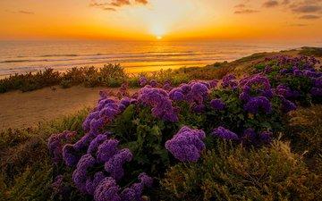 небо, цветы, берег, закат, горизонт, океан, калифорния, тихий океан