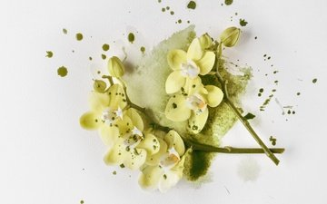 цветы, ветки, лепестки, белый фон, орхидеи