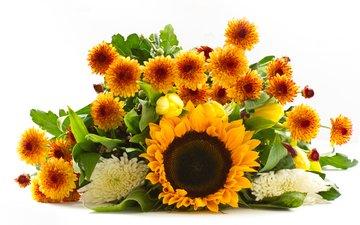 цветы, подсолнух, букет, тюльпаны, белый фон, хризантемы