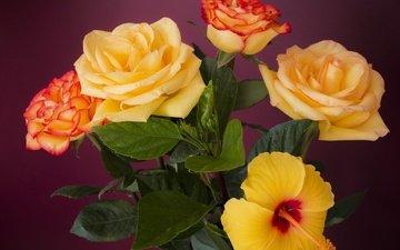 цветы, листья, розы, лепестки, букет, гибискус