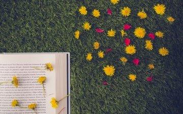 цветы, трава, лепестки, одуванчики, книга, страница