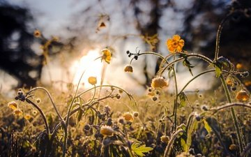 цветы, трава, природа, желтые, полевые цветы