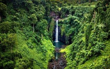 деревья, камни, зелень, лес, скала, водопад, тропики, джунгли, samoa