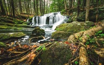 деревья, лес, водопад, корни, каскад