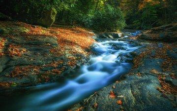 деревья, река, камни, лес, листья, осень, течение