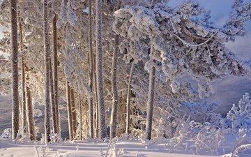 деревья, снег, зима, иней