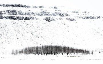 деревья, снег, зима, исландия