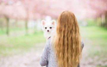 girl, dog, back, hair, each, chihuahua