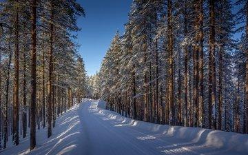 дорога, деревья, снег, лес, зима