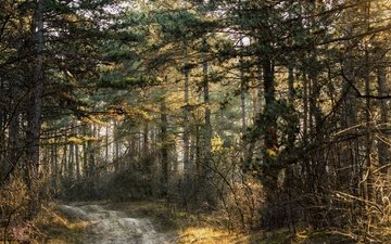 дорога, деревья, природа, лес