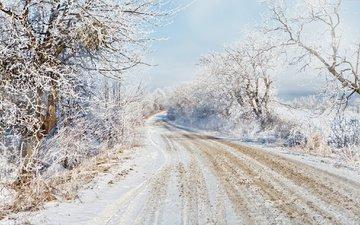 дорога, деревья, снег, зима