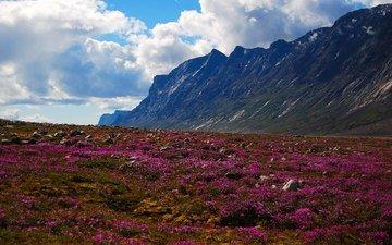 небо, цветы, облака, горы, природа, канада, национальный парк, ауюиттук