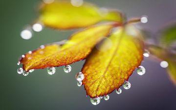 вода, листья, капли, капля, осень, лист, листик