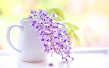 цветы, кисть, соцветие, глициния, вистерия