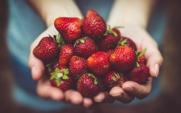 strawberry, berries, hands, palm