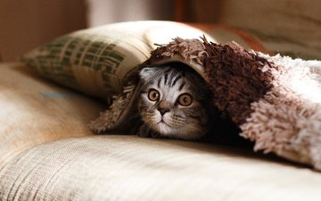 eyes, cat, look, kitty, surprise, pillow