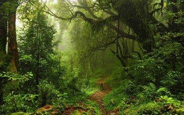 трава, деревья, зелень, лес, листья, тропинка