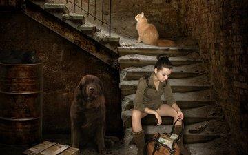 лестница, девушка, пистолет, черный, собака, дом, стены, креатив, коты, кирпич, деньги, рыжий, подвал, бочка, штукатурка, ступени, ящик, сумка