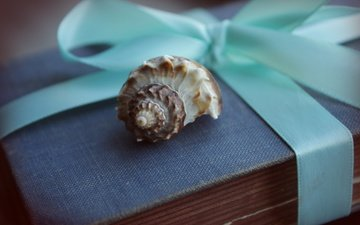 macro, tape, gift, box, shell, blue, sink