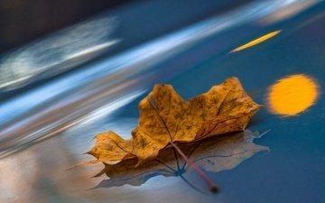 макро, отражение, осень, лист, кленовый лист