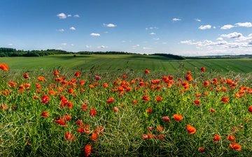 небо, цветы, облака, солнце, зелень, поля, красные, маки
