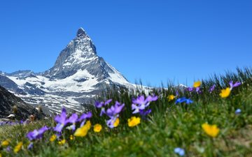 небо, цветы, трава, горы, снег, швейцария, альпы, церматт, маттерхорн