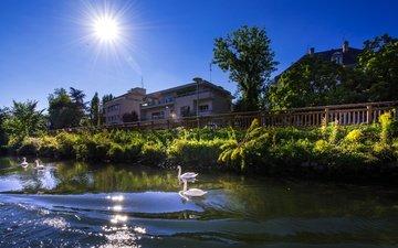 небо, деревья, река, солнце, зелень, лучи, кусты, лето, дома, франция, лебеди, страсбург