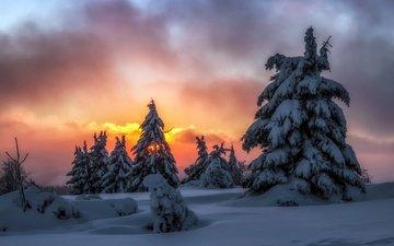 ночь, снег, природа, лес, зима, елки