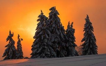 ночь, деревья, снег, зима, елки, ели