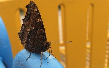 природа, бабочка, красивая