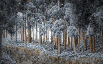 деревья, природа, лес, зима, иней