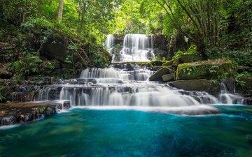 деревья, река, камни, лес, водопад, мох, джунгли