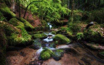 деревья, камни, лес, ручей, мох