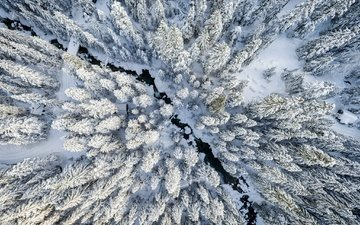 snow, forest, winter, the view from the top, ate
