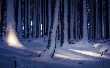 деревья, снег, лес, зима, стволы