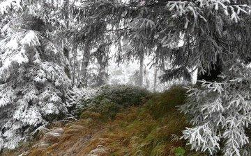 трава, деревья, снег, природа, лес, зима, иней