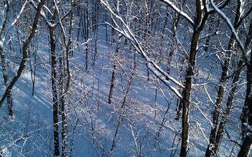 деревья, снег, природа, зима, пейзаж, стволы