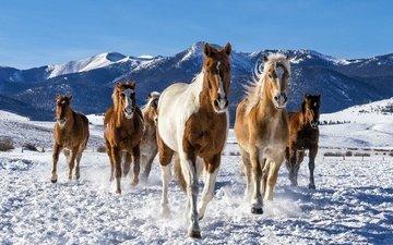 снег, зима, лошади, кони, табун