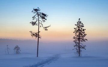 деревья, снег, зима, утро
