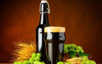 стакан, пиво, солод, хмель