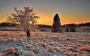 свет, деревья, дерево, зима, утро, иней