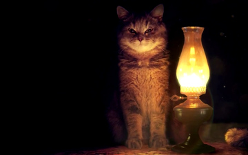 light, background, cat, look, lamp