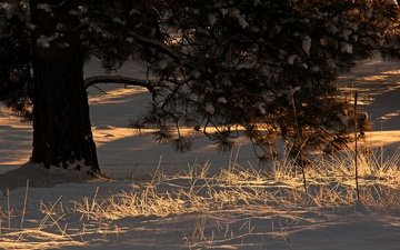 свет, снег, дерево, зима, утро