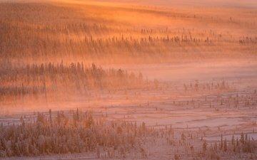 свет, деревья, снег, лес, зима