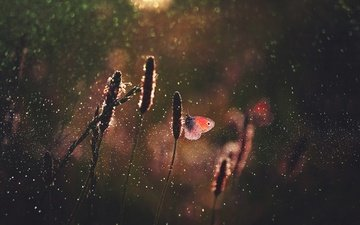 light, grass, macro, insect, drops, butterfly, glare, bokeh