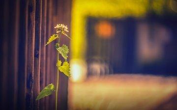 трава, фон, забор, размытость, растение