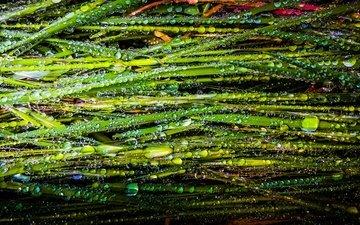 трава, природа, роса, капли