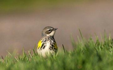 трава, природа, птица, клюв