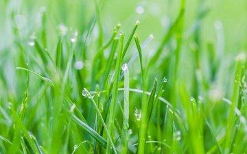 трава, роса, капли, весна